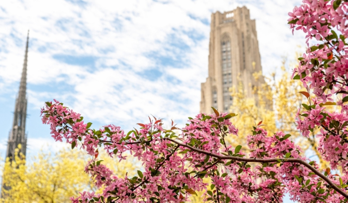 A picture of the Cathedral of learning and a flowering tree
